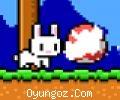 Yumurtacı Tavşan